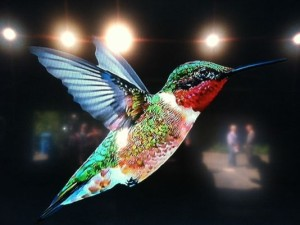 hummingbird-google